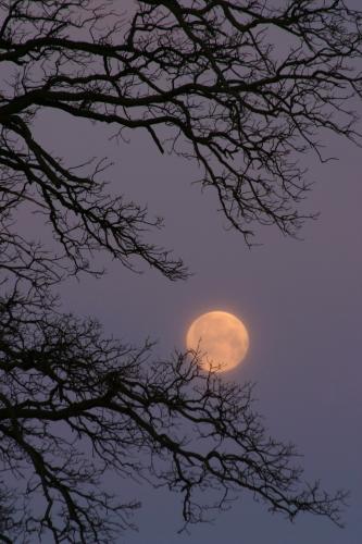 D-27-35 - Full Moon & Tree Branches. Caseville, MI.