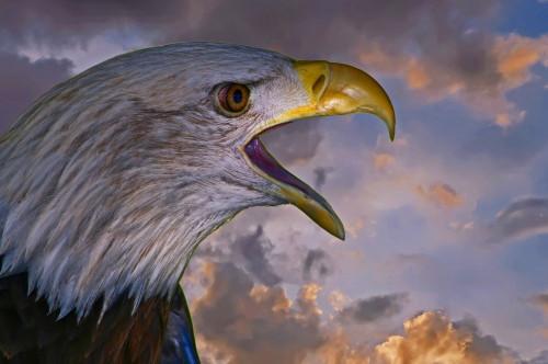D-58-97 - American Bald Eagle at Sunset. Caseville, MI. Digitally enhanced.
