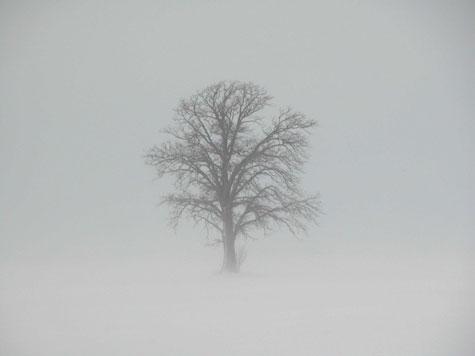 D-30-15 - Lone Tree in Wintry Fog. Caseville, MI.