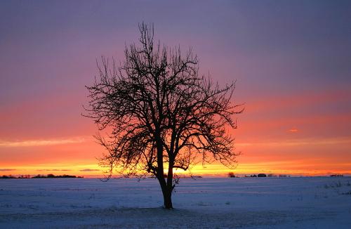 D-30-37 - Lone Tree at Sunset. Pinnebog, MI.