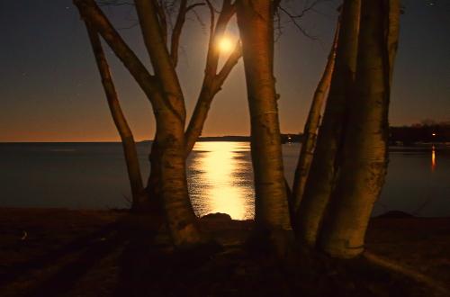 D-17-120 - Birch Trees, with Moonlight Shining off Lake Huron. Grindstone City, MI. Digitally enhanced.