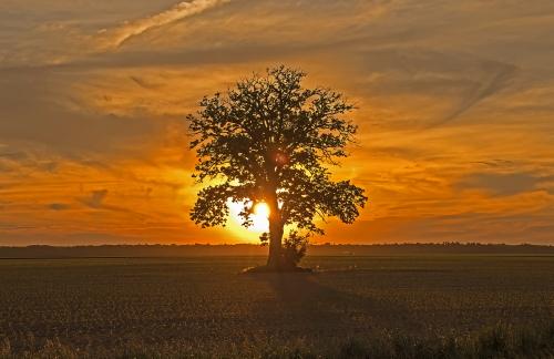 D-28-57 - Lone Tree at Sunset. Caseville, MI.