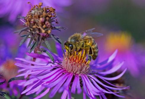 D-56-219 - Honey Bee. Pigeon, MI.