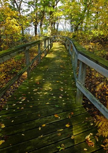 D-RP-173 - Boardwalk leading to Lake Huron. Sleeper State Park. Caseville, MI.