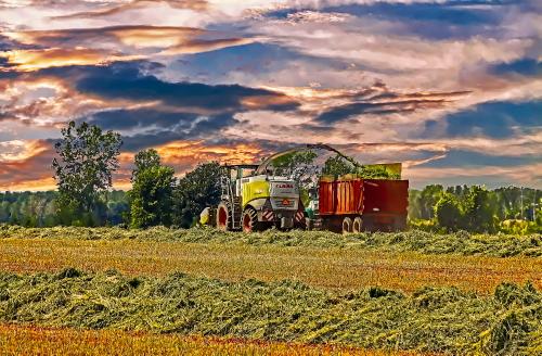 D-8-83 - Harvesting Crops. Digitally enhanced. Port Austin, MI.