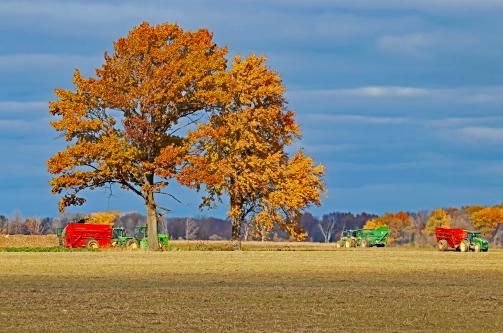 D-8-84 - Harvest Time. Caseville, MI.