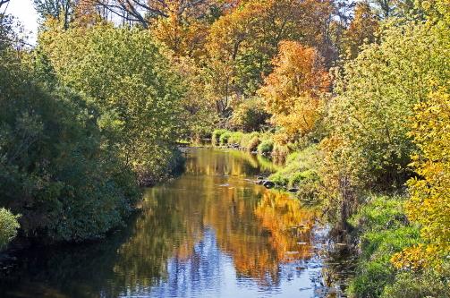 D-15-356 - Autumn Scene along the Pigeon River. Caseville, MI.
