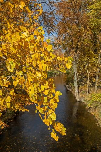 D-15-364 - Autumn Scene along the Pigeon River. Caseville, MI.