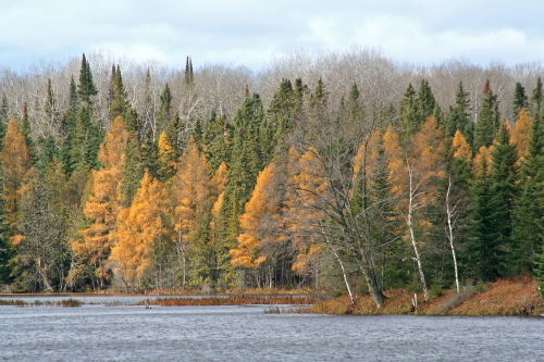 D-15-99 - Scene along the shore of the North Branch of the AuSable River. Rainbow Resort Landing. Luzerne, MI.